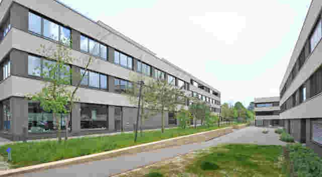 Web Reinach In Den Steinreben Foto3